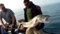 Lake Trout Video